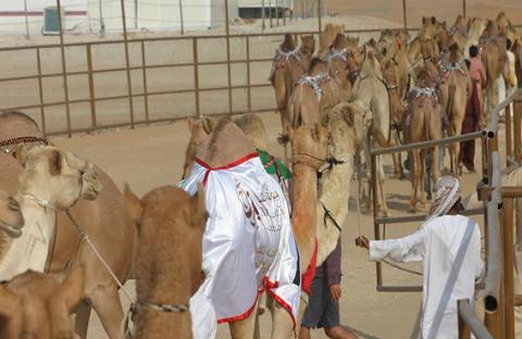 فوز معروفة العرب بالمركز الأول في شوط المفاريد المفتوح يرفع سعرها إلى 3 ملايين درهم