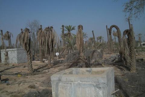 مشكلة المياه الجوفية تقتل أشجار النخيل واقفة وتجبر المواطنين على مغادرة مزراعهم نهائيا