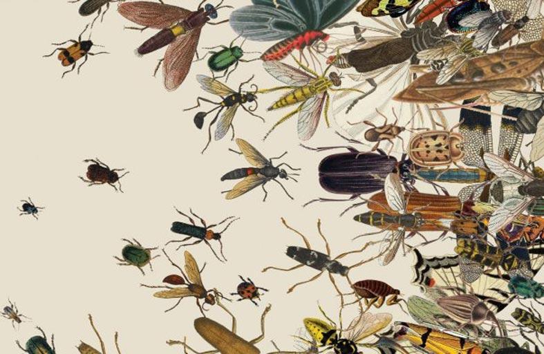 أعداد الحشرات الأرضية تنخفض بنحو 1 % سنويا