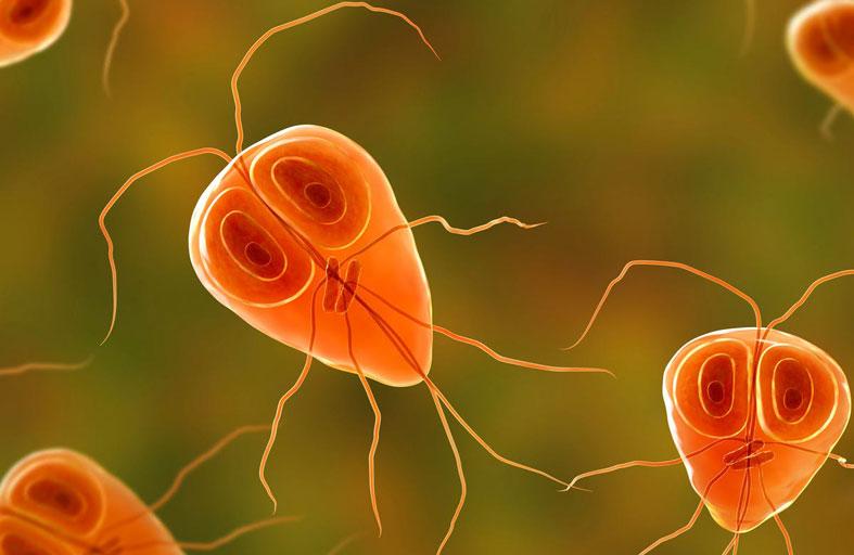 الديدان والطفيليات .. كيف تصيبنا بالمرض؟