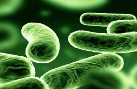 فصيلة من الجينات تحمي من جراثيم المعدة
