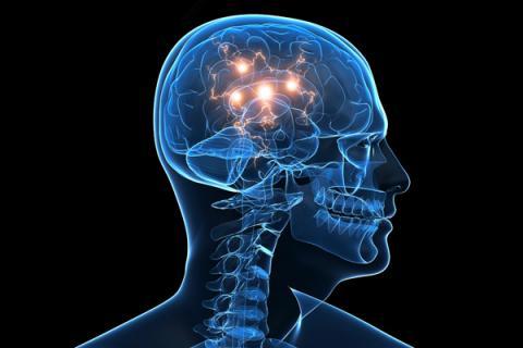 العلماء يرسمون (خارطة الدماغ)