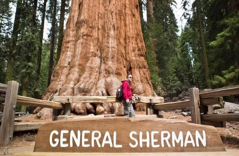 محاولات لإنقاذ أكبر شجرة في العالم من حريق