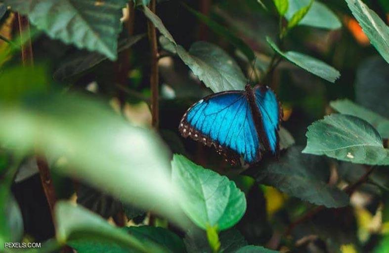اكتشاف أول نوع حشرات ينقرض بسبب البشر