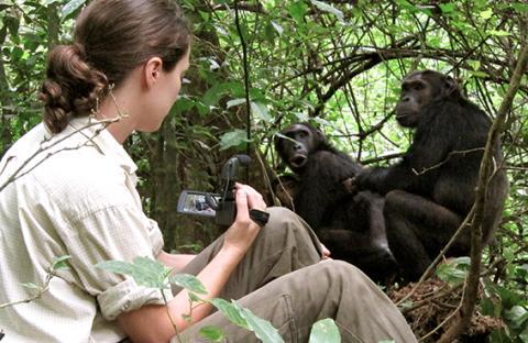 لتفهموا الموت راقبوا الشمبانزي!