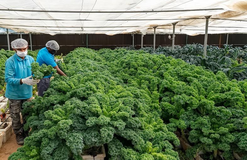«شروق» تطلق مبادرة لتوزيع خضروات عضوية مجاناً على الأسر المتعففة
