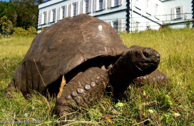 189 عاما.. ما سر العمر الطويل لأكبر حيوان بري بالعالم؟