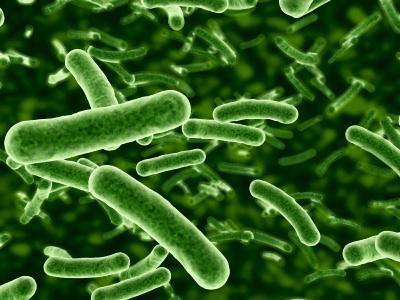 بكتيريا الأمعاء قد تشكل خطراً على الأوعية القلبية