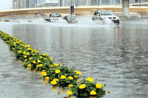 هطول أمطار الخير على مدينة زايد