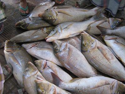 لجنة تنظيم الصيد في الشارقة تؤكد الحفاظ على الثروة السمكية
