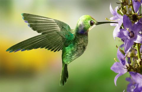 الطائر الطنان