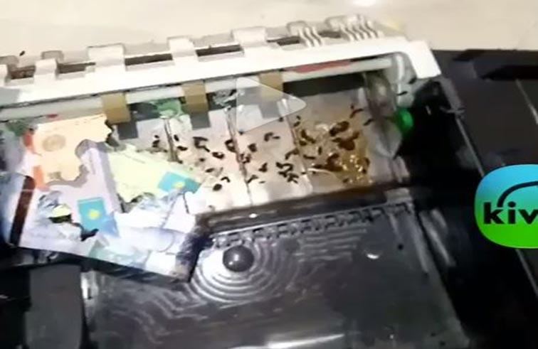 فئران تنهش أموال الصراف الآلي