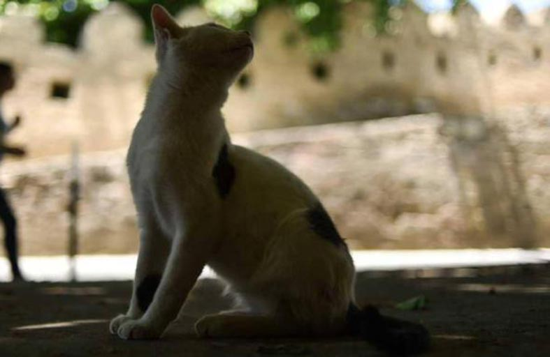 القطط الجائعة التهمت جثة مربيها المسن