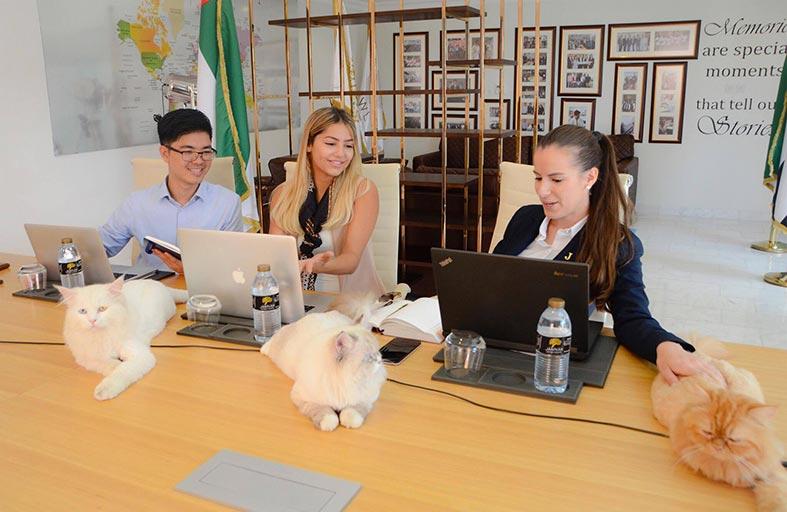 فنادق ومنتجعات جنة تضم 8 قطط إلى فريق عملها في أبوظبي