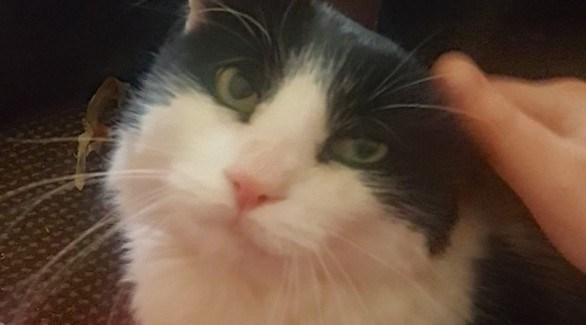 تعثر على قطها بفضل رقاقة إلكترونية