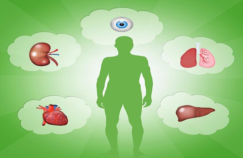 هل تصبح أعضاء جسم الإنسان المطبوعة متوافرة للزرع؟