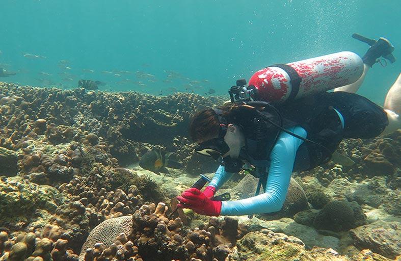 باحثون بجامعة نيويورك أبوظبي يكتشفون قدرة الشعاب المرجانية على مواجهة التغييرات المناخية