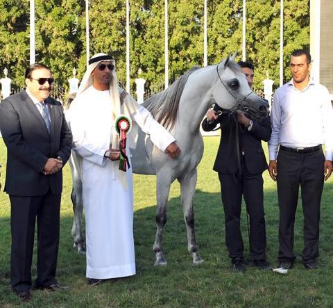 مربط دبي يقتص ثلاث ميداليات من بطولة أبوظبي الدولية لجمال الخيول العربية