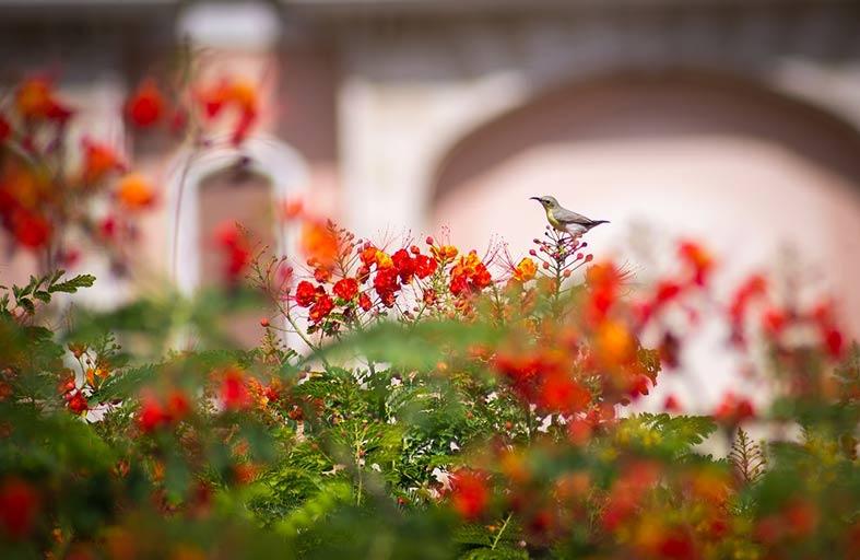 مدينة الزهور تستعد لموسم استبدال الزهور بمليوني زهرة
