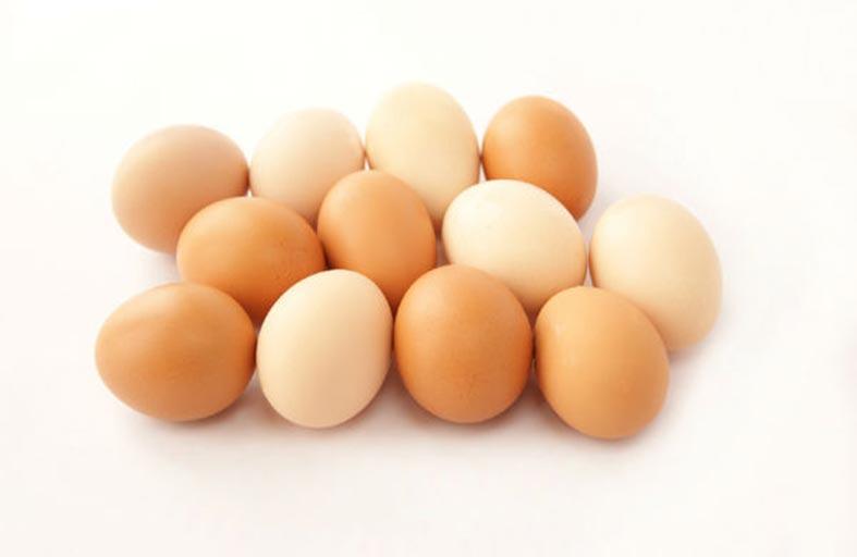 بيض الدجاج مهم لنمو الأطفال