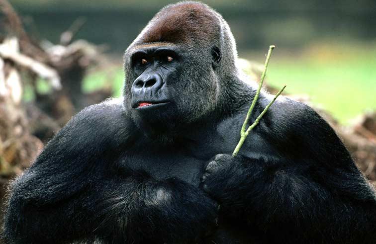 الحيوانات لن تتمكن من بلوغ مقدرات البشر الفكرية