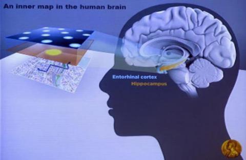 نظام تحديد المواقع في الدماغ مرتبط بالذاكرة