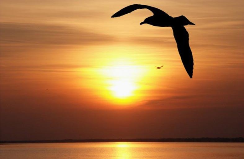 طيور بابل