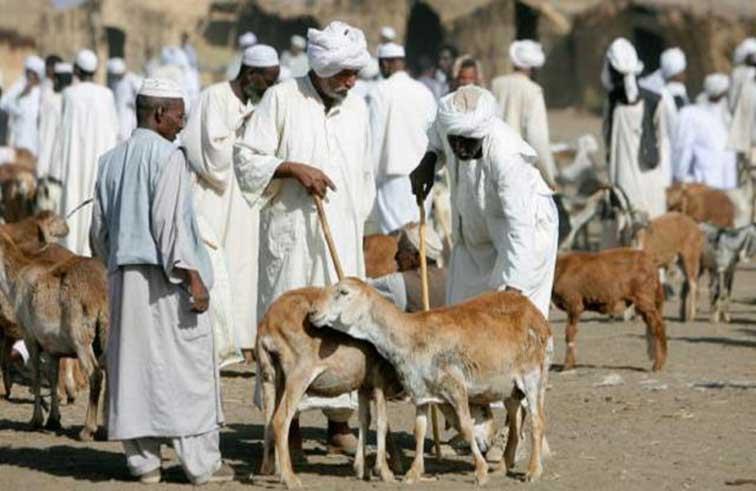ارتفاع مفاجئ لأسعار الأضاحي في السودان