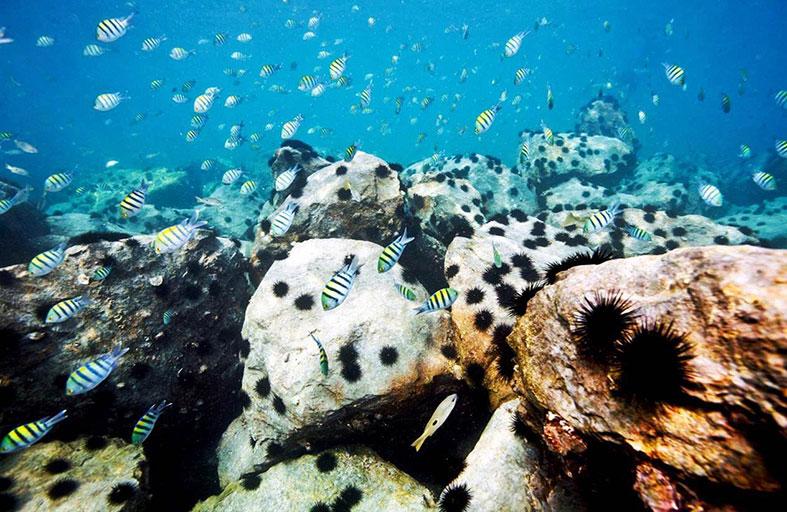 الشعاب المرجانية تنمو بنسبة 20 في المائة في مشروع جزر العالم