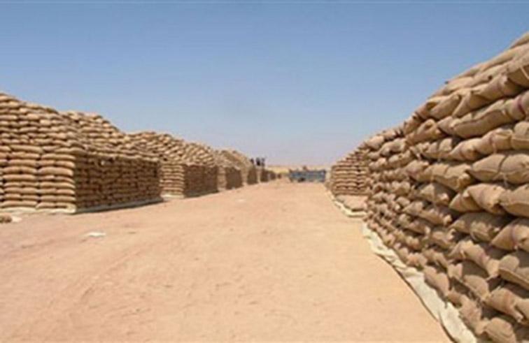 العراق يشتري قمحا صلدا من روسيا وكندا