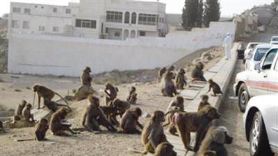 القردة تحتل مدرسة