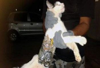 قط يساعد السجناء على الفرار