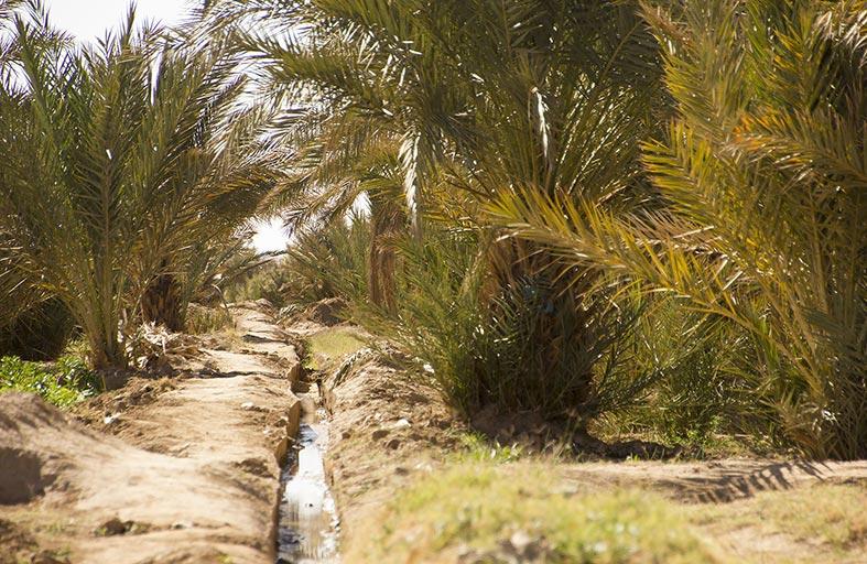 انخفاض منسوب المياه الجوفية في الإمارات بمعدل خمسة ميليمترات سنويا
