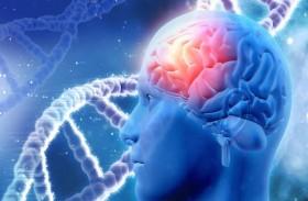 بعكس ما هو شائع.. علماء يتحدثون عن أكثر من مخ لدى الإنسان!