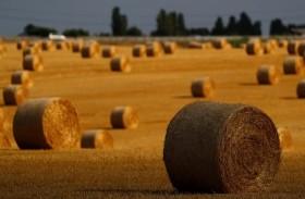 ألمانيا تسعى لأسواق جديدة لتصدير القمح
