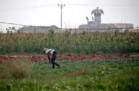 المبيدات الإسرائيلية تدمر أراضي الفلسطينيين في غزة