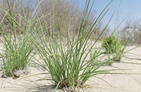 بيئة أبوظبي تصدر كتابا عن الأنواع الشائعة من النباتات العشبية في الدولة
