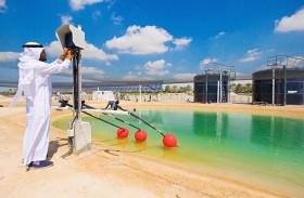 معهد مصدر يعلن عن انضمام باور ريسورسز إلى اتحاد أبحاث الطاقة الحيوية المستدامة