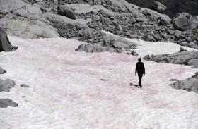 جليد زهري على جبال الألب الإيطالية