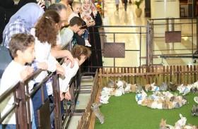 بلدية مدينة العين : منح صلاحيات محال بيع الحيوانات و إنشاء نظام يتيح التبني لحيوانات الرفقة