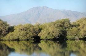 هيئة البيئة والمحميات الطبيعية بالشارقة تنظم ورشة «تطوير استراتيجية مراقبة الأراضي الرطبة والطيور المائية»