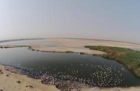الإمارات تحتفل باليوم العالمي للبيئة اليوم