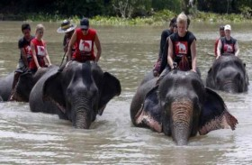 الأفيال تنقذ مئات السائحين من السيول