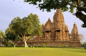 بقرة تختار موقع تشييد معبد هندوسي