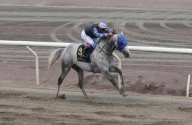 «مهداف عذبة» يتوج بطلا لكأس رئيس الدولة للخيول العربية الأصيلة في السويد