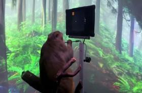 قرد يتحكم بلعبة فيديو