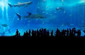 أعلى حوض مائي في العالم