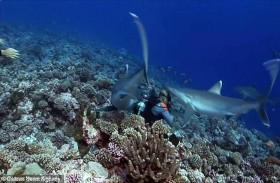 رأس غطاس بين فكي القرش