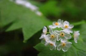 أزهار تصبح شفافة بعد المطر