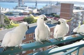 طيور الدمار الشامل تثير الذعر
